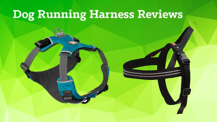 Dash-approved dog running harnesses