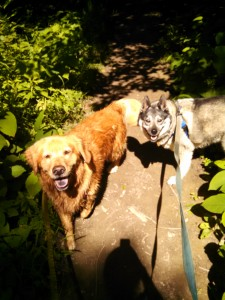Noki and Lilly hiking